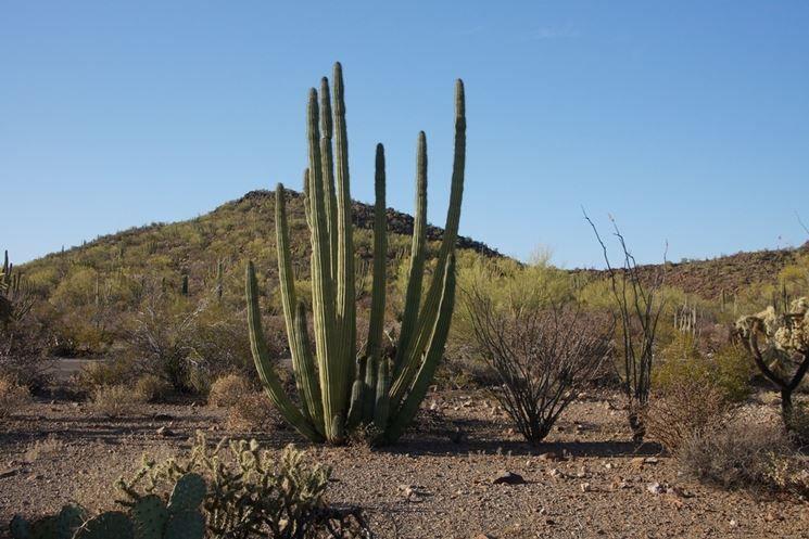 Da Scuoleria è arrivata la cactus mania!